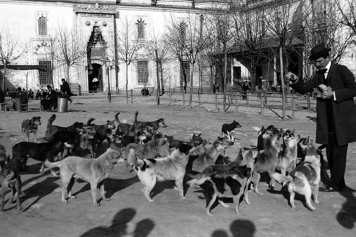 Himaye-i Hayvanat Cemiyeti adıyla Türkiye'deki hayvanları koruma amacı güden ilk dernek kuruldu. Dünyada ise ilk dernek 100 yıl önce İngiltere'de kurulmuştu. tarihte bugün